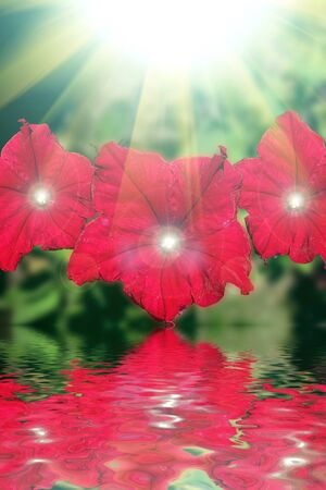 Red flowers design.With copy-space  photo