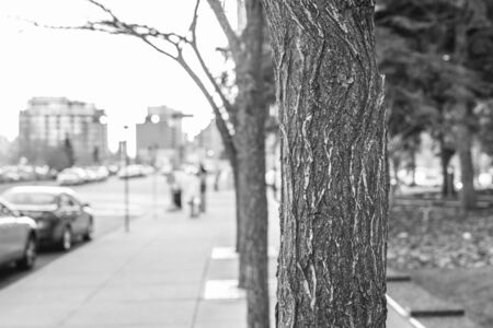 Downtown Street with tree in Focus