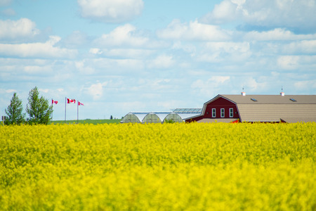 Canola fields with farmhouse in distance