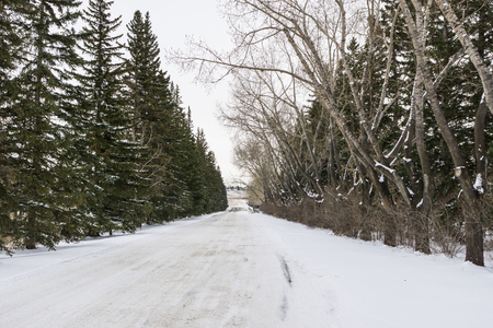 winter forest on both sides of a road in Alberta 免版税图像
