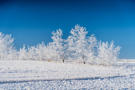 trees covered in snow in outdoor field during Winter