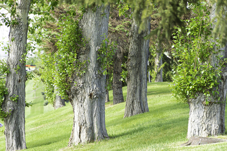 Trees in park to provide shade during hot summer days Imagens