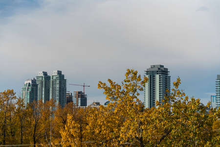 Downtown city skyline with fall trees in foreground