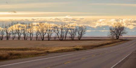 Line of Trees beside a road in Rural alberta