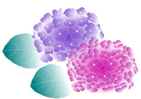 blue petals: Illustration of hydrangeas Stock Photo