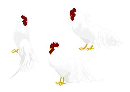 whole creature: Illustration of cock Illustration