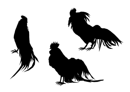 poultry farming: Illustration of cock silhouette