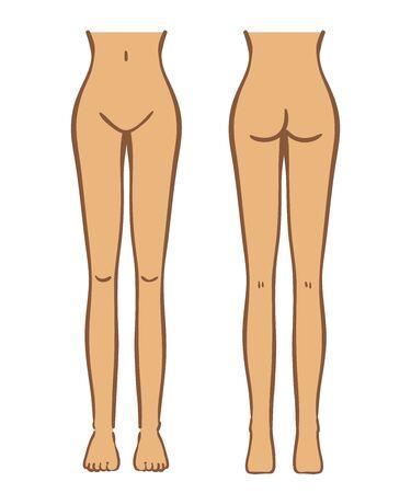 Illustration of female lower body