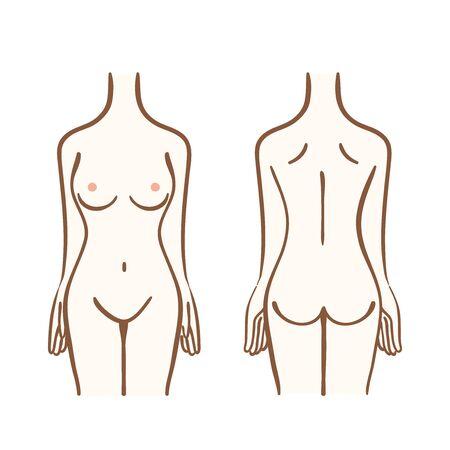 Illustration du torse féminin