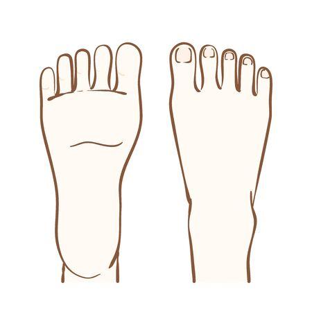 Illustration du cou-de-pied et de la plante du pied