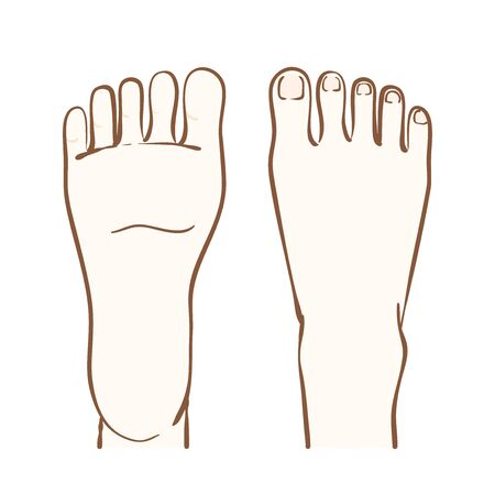Illustration of instep and sole of foot