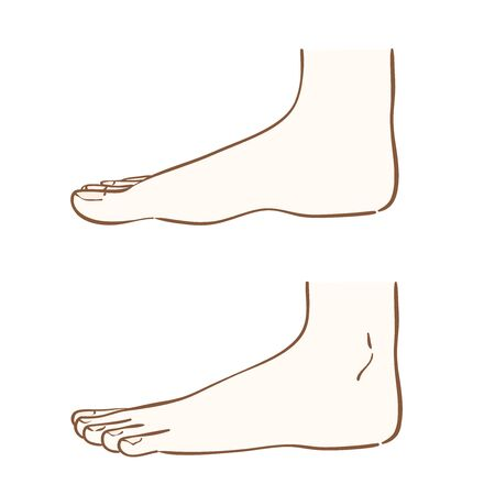 Illustration of a foot seen from the side Banque d'images - 129353359