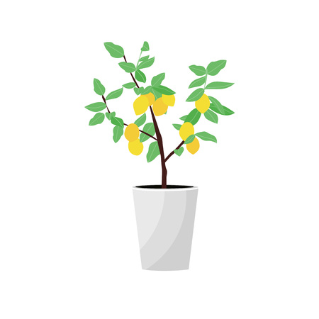 Vector Illustration. Plant in pot. Lemon tree. Flat style Vector Illustratie