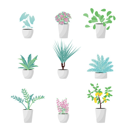 Vector Illustration. Set of Plants in pot. Aslenium, Salvia Officinalis, Coleus, Caladium, ferns, Drocena, Zameoculcas, Angelonia  and lemon tree. Flat style Illustration