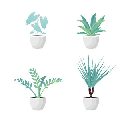 Vector Illustration. Set of Plants in pot. Aslenium, Caladium, Drocena, Zameoculcas. Flat style