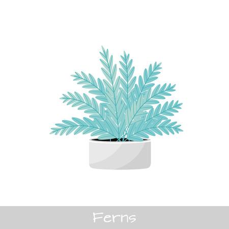 Vector Illustration. Plant in pot. Ferns flower. Flat style