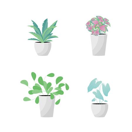 Vector Illustration. Plants in pot. Aslenium, Salvia Officinalis, Coleus, Caladium flower. Flat style