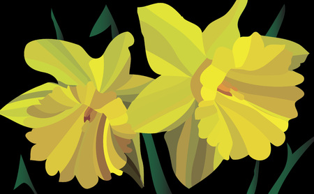 Vector Illustration. Narcissus plant from pieces on black background. Yellow plant
