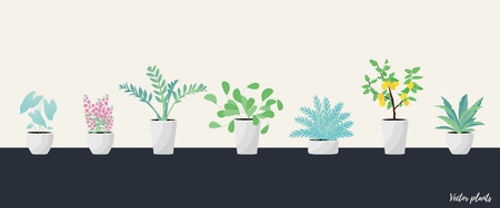 Vector Illustration. Set of Plants in pot. Aslenium, Salvia Officinalis, Caladium, ferns, Drocena, Zameoculcas, Angelonia and lemon tree. Flat style Illustration