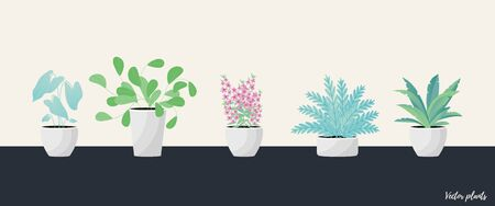 Vector Illustration. Plants in pot. Aslenium, Salvia Officinalis, Coleus, Caladium, ferns flower. Flat style Illustration