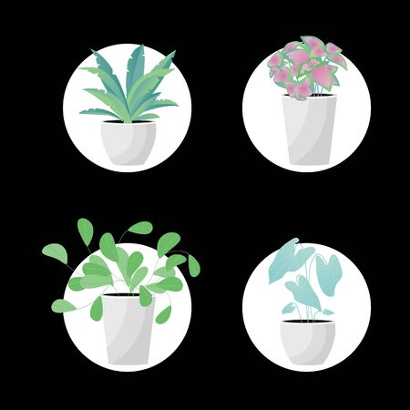 Vector Illustration. Plants in pot. Aslenium, Salvia Officinalis, Coleus, Caladium flower. Flat style