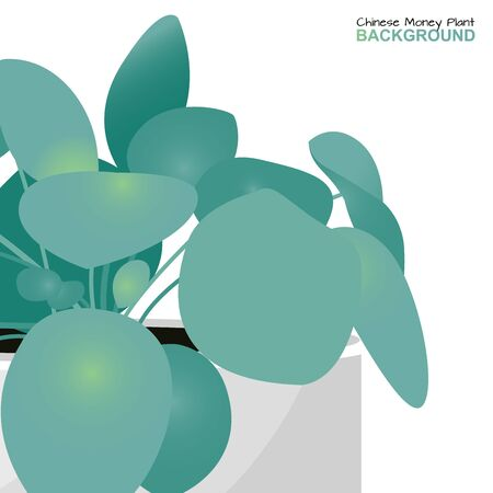Young pancake plant or pilea peperomioides, urticaceae home flower in a pot in modern flat style. Chinese money plant isolated for background design. Vector Illustration