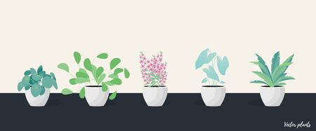 Collection of decorative houseplants isolated. Bundle of trendy plants growing in pots or planters. Set of beautiful natural home decorations. Flat colorful vector illustration