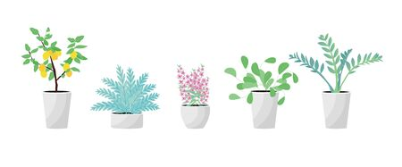 Collection of decorative houseplants isolated on white background. Bundle of trendy plants growing in pots or planters. Set of beautiful natural home decorations. Vector illustration Иллюстрация