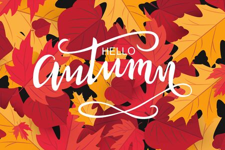 Hello autumn hand draw. Template holiday banner, thanksgiving poster with red mapleleaf. Vector Illustration