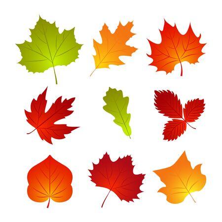Set di foglie autunnali. Elemento della natura per poster, pubblicità, sfondo del ringraziamento. Modello di progettazione. illustrazione vettoriale