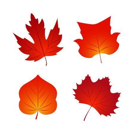 Set of Autumn fall leaf. Nature element for poster, ad, thanksgiving background.  Vector Illustration Illustration