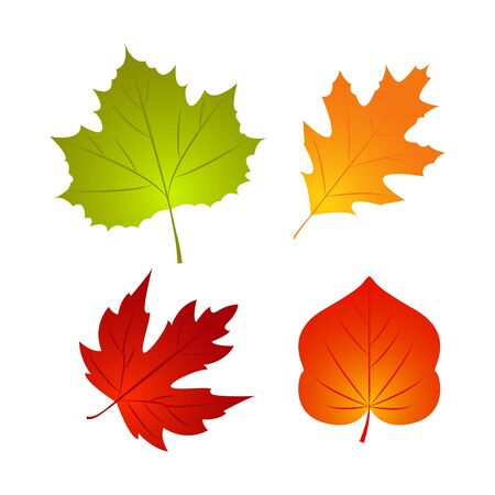 Isolated Autumn fall leaf. Nature element for poster, ad, thanksgiving background. Template design. Vector Illustration