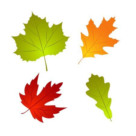 Set of Autumn fall leaf. Nature element for template design. Vector Illustration