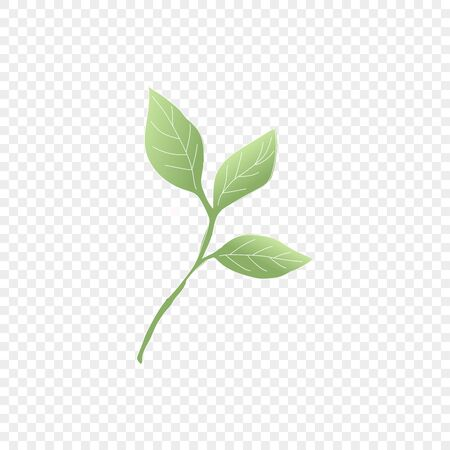 Isolated green leaf. Vector floral element. Cute romantic symbol for wedding card on transparent background. Vector Illustration