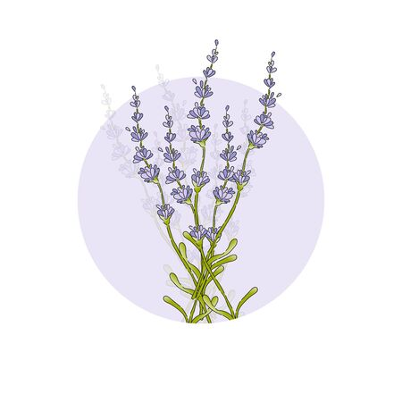 Isolated lavender flower bouguet. Silhouette purple floral icon. Vector Illustration