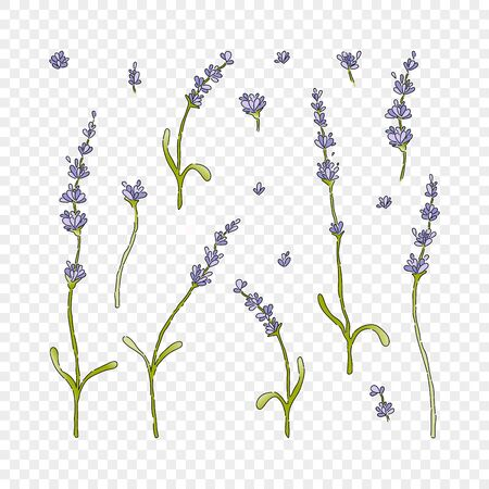 Set of isolatedlavender flower for wedding. Vector floral element. Cute romantic icon for wedding card on transparent background. Vector Illustration
