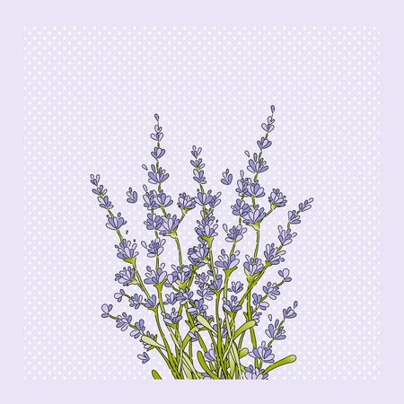 Isolated lavender flower bouquet. Silhouette purple floral icon. Vector Illustration Иллюстрация