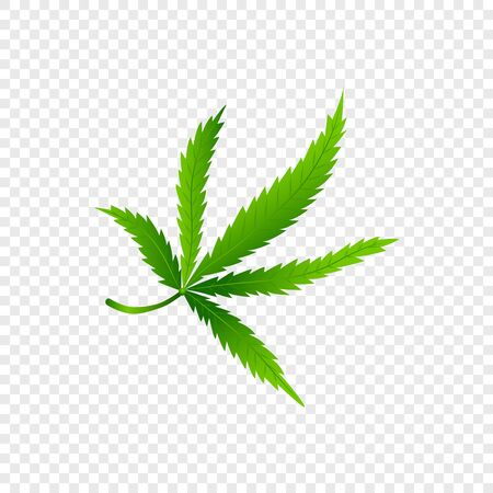 Isolated Cannabis or marijuana leaf. Realistic isolated hemp . Concept green icon on transparent background. Grass symbol in modern flat style. Vector Illustration