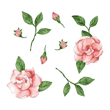 Set of isloated watercolor flower. Pink rose in vector style. Decoration nature element for card, wedding, poster. Vector Illustration