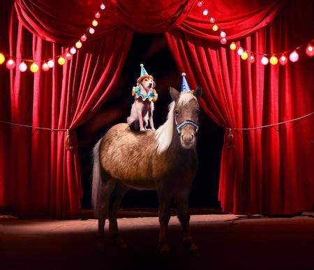 animaux cirque: Montrer mettant en vedette le chien & poney