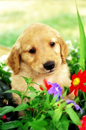loveable: Puppy