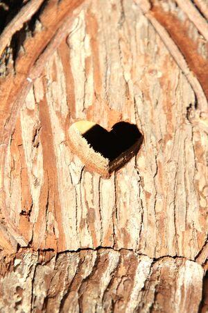 Valentine heart from a tree carving. Reklamní fotografie