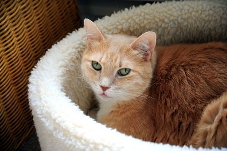 Cat relaxing in his warm fuzzy bed. Stock Photo