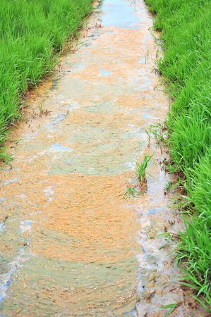 Polluted stream in the middle of a field. Stock Photo - 11375203