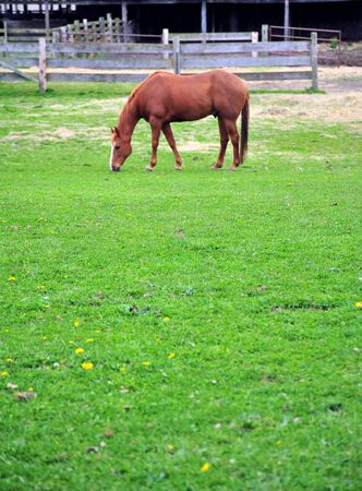 Horse grazing in the grass. 写真素材