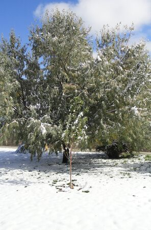 Trees in the winter snow. Stok Fotoğraf