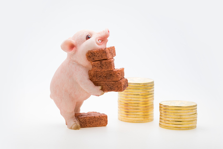 Piggy carry bricks Фото со стока