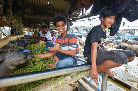 sulawesi: Rantepao, Tana Toraja, Sulawesi, Indonesia - August 16: Buffalo Market Pasar Bolu on August 16, 2016 in Rantepao, Sulawesi. The market for trading buffalos During funeral ceremonies for sacrifice