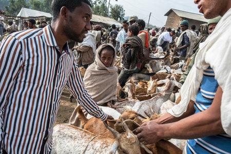 Lalibela, Ethiopia - January 6: An unidentified man selling goats in the Lalibela market on January 6, 2018 in Lalibela, Ethiopia.