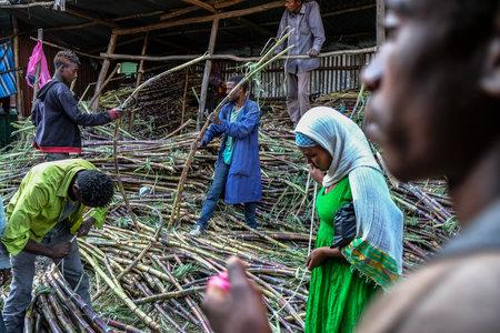 Bahir Dar, Amhara Region, Ethiopia - January 20: Unidentified man selling sugarcane in the market on January 20, 2018 in Bahir Dar, Ethiopia.